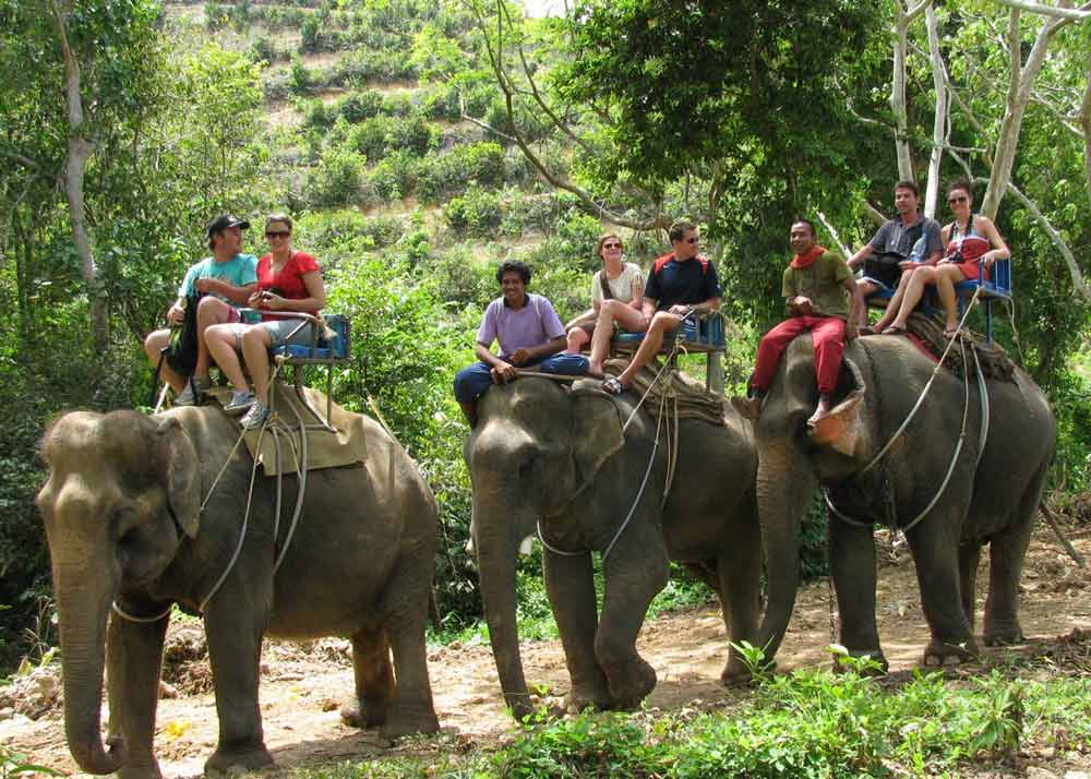 Elephant-Trekking-Activities-Phuket