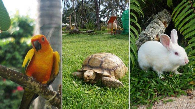 animal_friendly_thavorn_palm_beach_resort