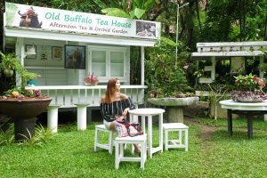 Tea_House_Thavorn_Palm_Beach_Resort
