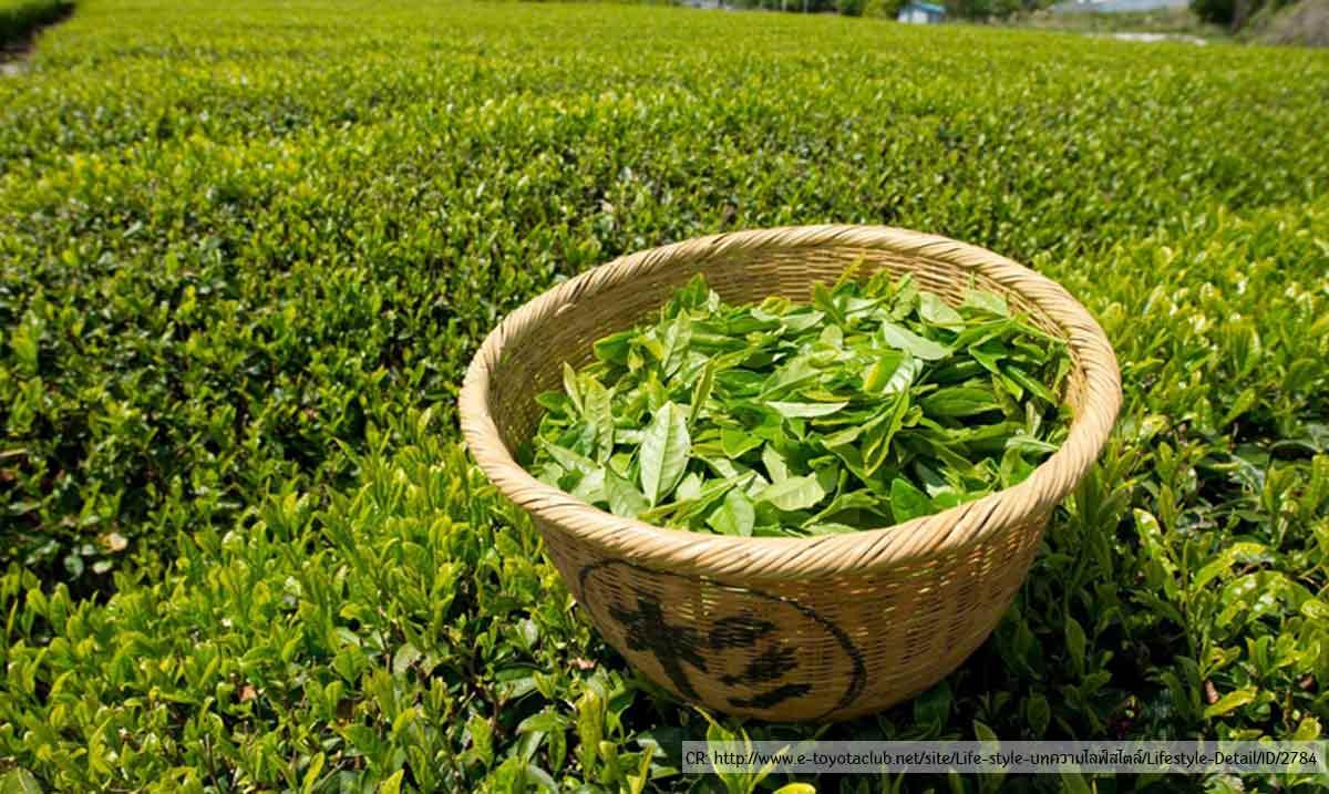 Green-tea-thavorn-palm-beach-phuket