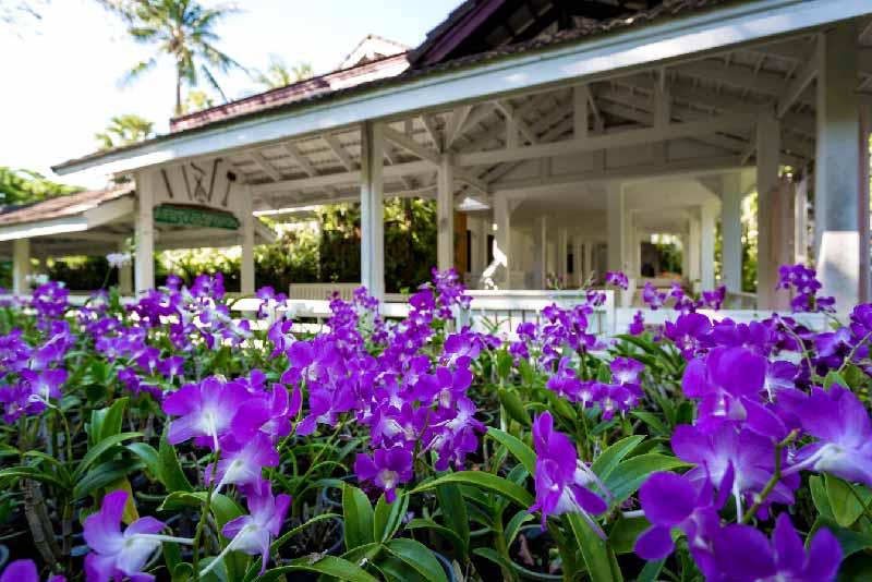 Orchid - Thailand Tropical Garden