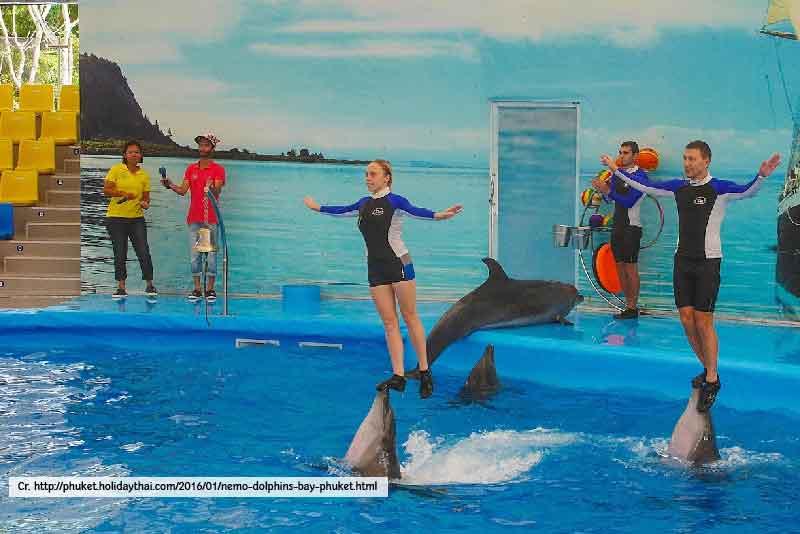Dolphin Bay Nemo Phuket