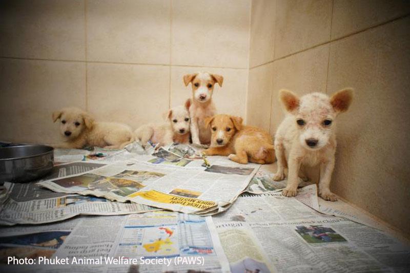Phuket Animal Welfare Society